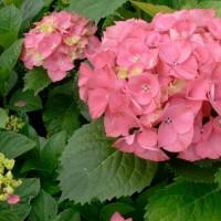 Pink Bouquet Devon pic