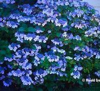 Blue wave2