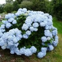 Mousseline blue