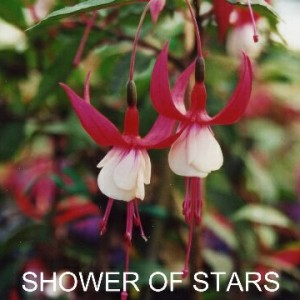 shower of stars.jpg