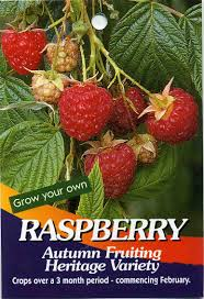 Raspberry heritage canes bare root