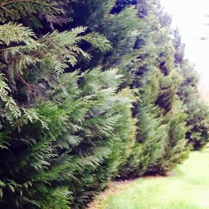 Leightons green daylesford botanic G