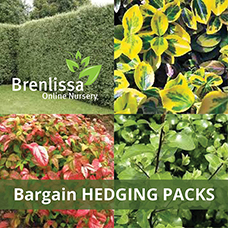 Hedge-Pack-1 (2)