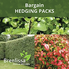 Hedge-Pack-2 (2)