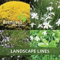 Landscape-Lines-1 (2)
