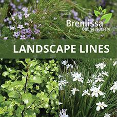 Landscape-Lines-2 (2)