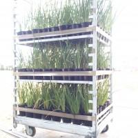 Budget Landscape Lines/Hedging plants & package deals.