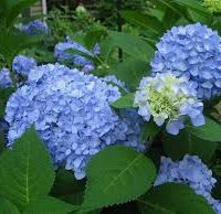 Blauer-prinz-Blue-Prince
