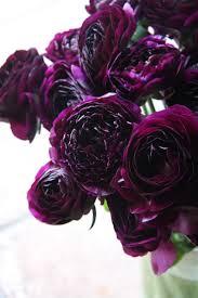 Ranunculus-black