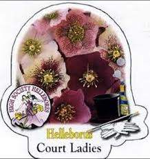 court ladies Hellebore