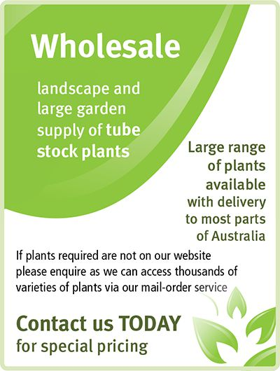 Wholesale Plants