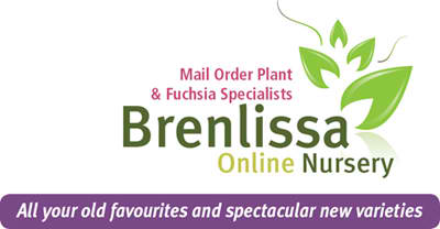 Plant sourcing and ordering service