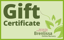 Our Gift Certificates