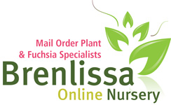 Brenlissa Online Nursery