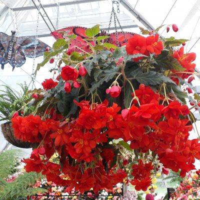 Our Hanging baskets & Garden Accessories