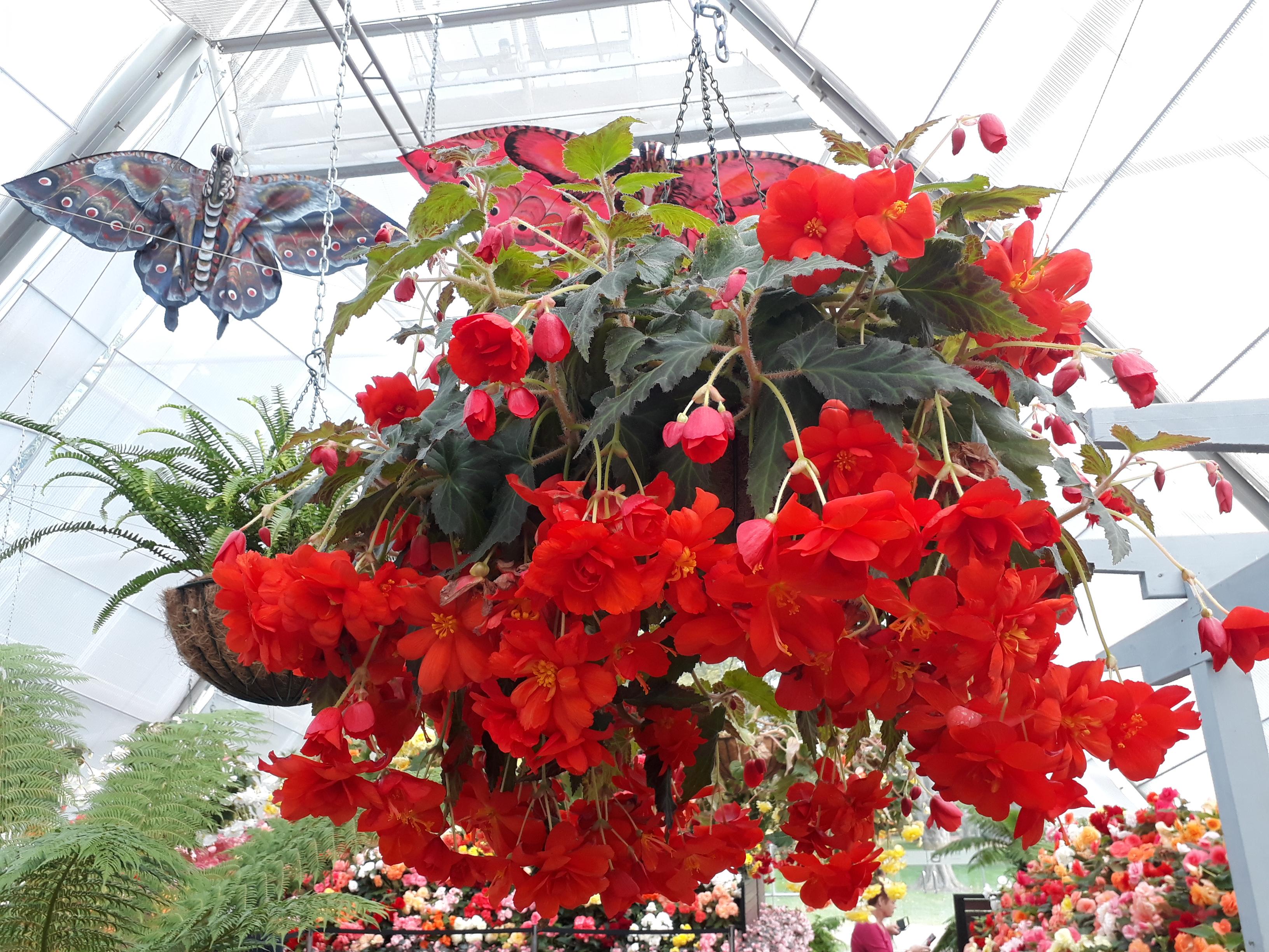 Our Hanging baskets & Garden Accessories