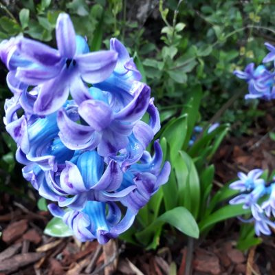 Spring & Summer Bulbs Collection 2021 (Annual Seasonal releases only)